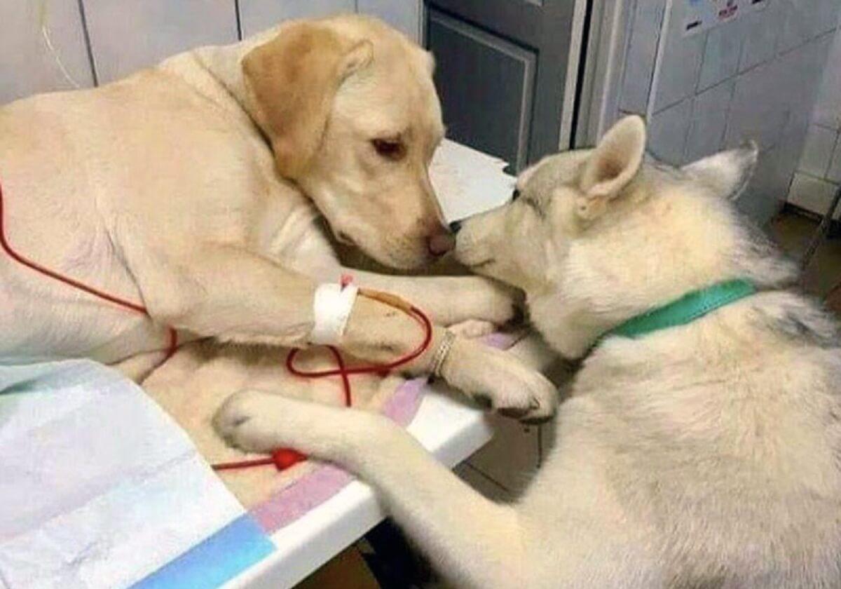 cao conforta cao close - Cães amigos se confortam em clinica veterinária e viralizam!