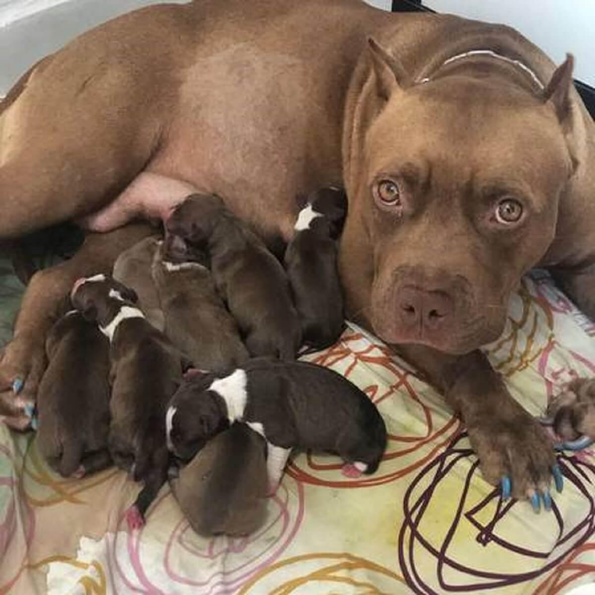 xfilhotesjpgpagespeedic h0dhk8zwly - Fisioculturista salva filhote de cão realizando massagem cardíaca e respiração boca a boca