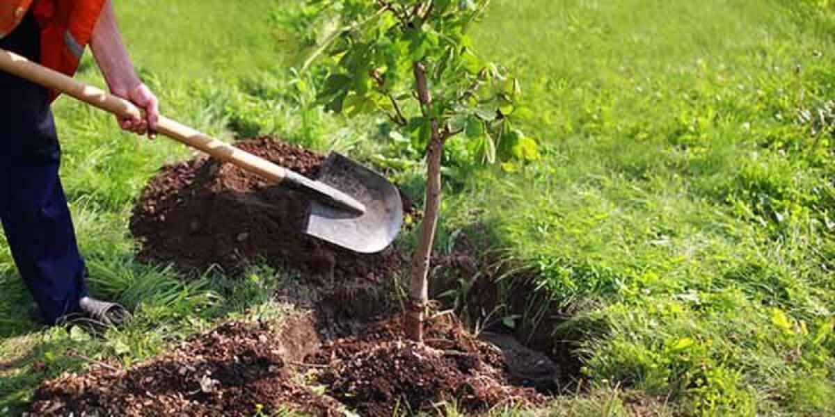 arvores plantas - Inspirada na atitude da Prefeitura de Palmas - Tocantins, separamos 3 atitudes reais para ajudar o meio ambiente!