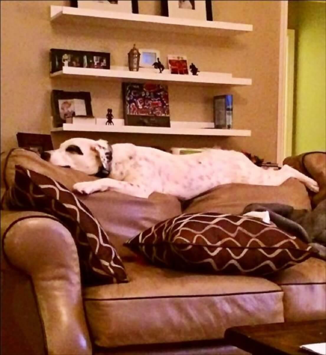 """jubilee dog 545x592 - Abandonada por ser """"carinhosa"""", Cachorrinha é adotada por família tão amorosa quanto ela!"""
