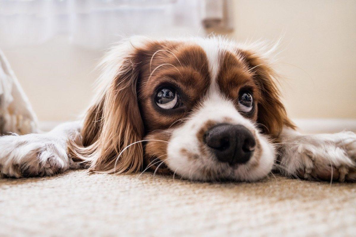 dog 2785074 1280 scaled - Holanda é o primeiro país sem cachorros vivendo nas ruas