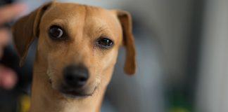 cachorro desconfiado destaque 324x160 - Inicio