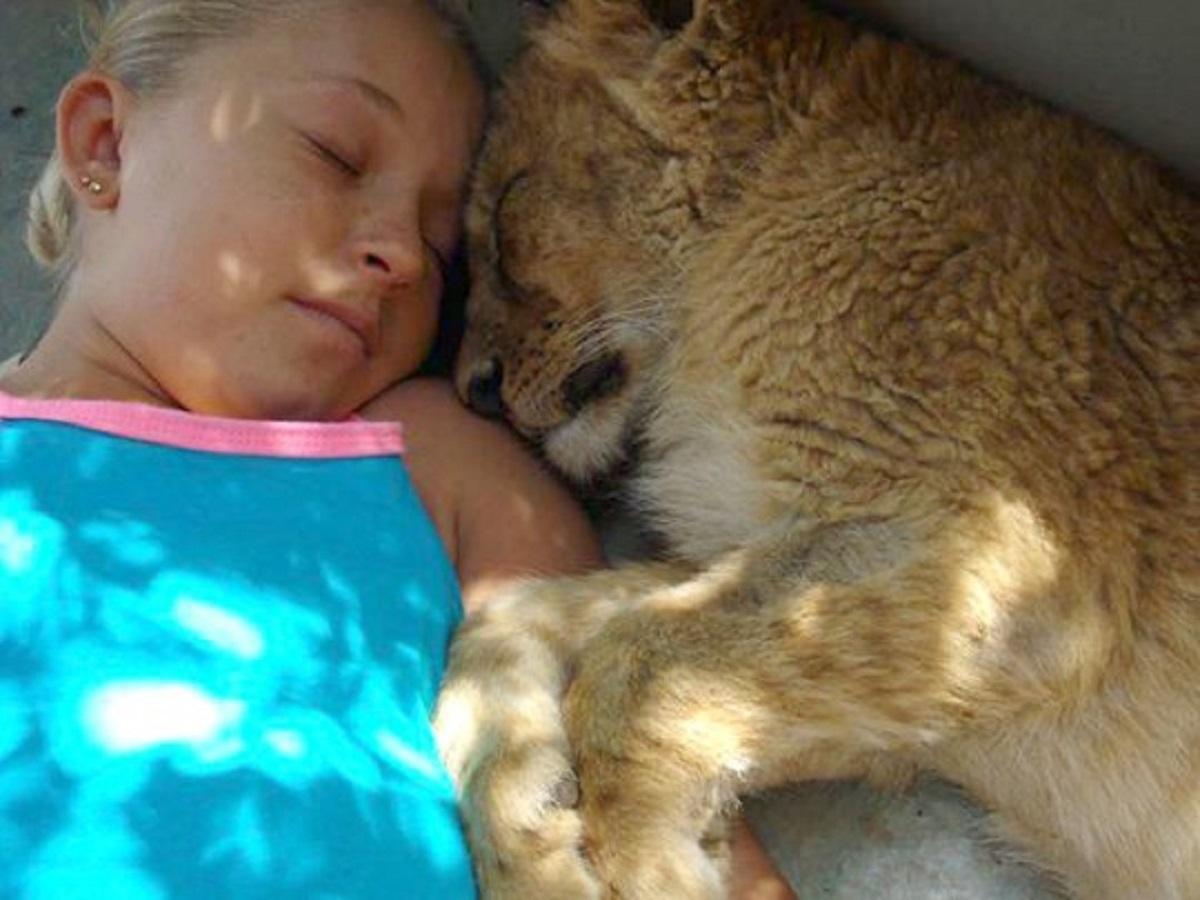 carinho - Jovem que nasceu em santuário tem ligação especial com Guepardos e até dorme com eles!