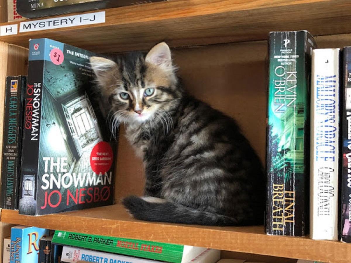 otis clementines books coffee cats 5e3145b352748  700 - Livraria no Canadá conta com gatinhos andando livremente para serem adotados!