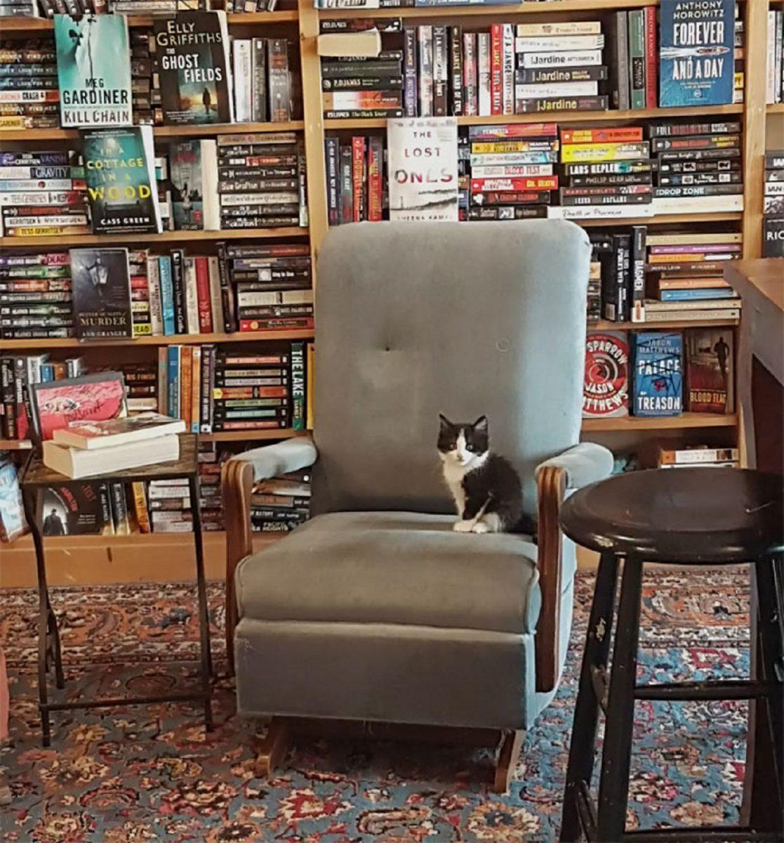 otis clementines books coffee cats 5e3145be1e496  700 1 scaled - Livraria no Canadá conta com gatinhos andando livremente para serem adotados!