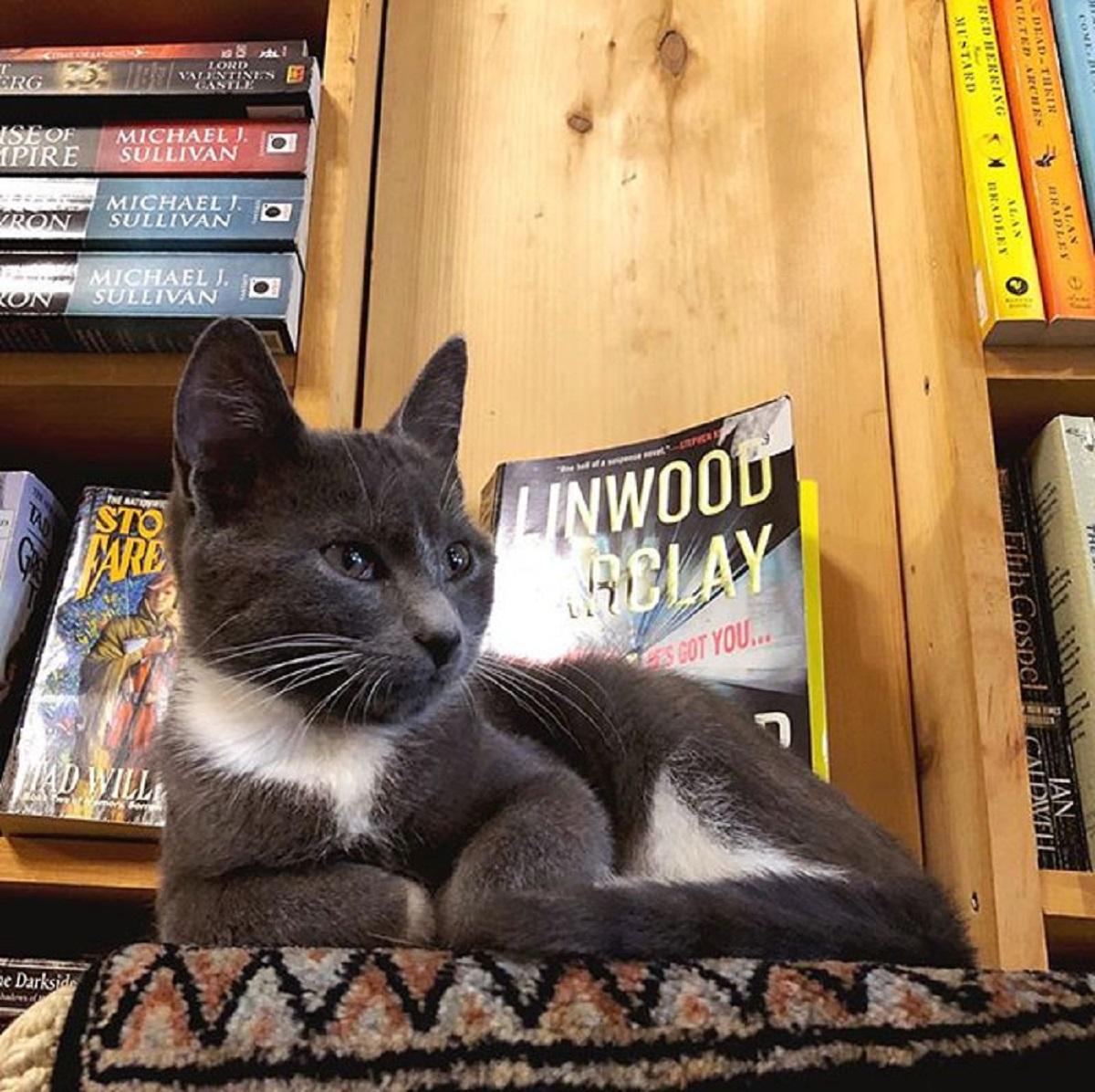 otis clementines books coffee cats 5e3145c020c96  700 - Livraria no Canadá conta com gatinhos andando livremente para serem adotados!