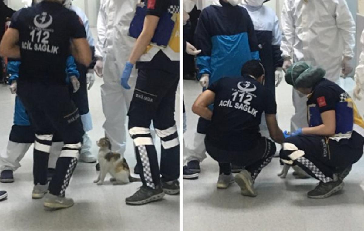 fgfg - Gata carrega seu filhotinho até o hospital e fica aguardando atendimento!