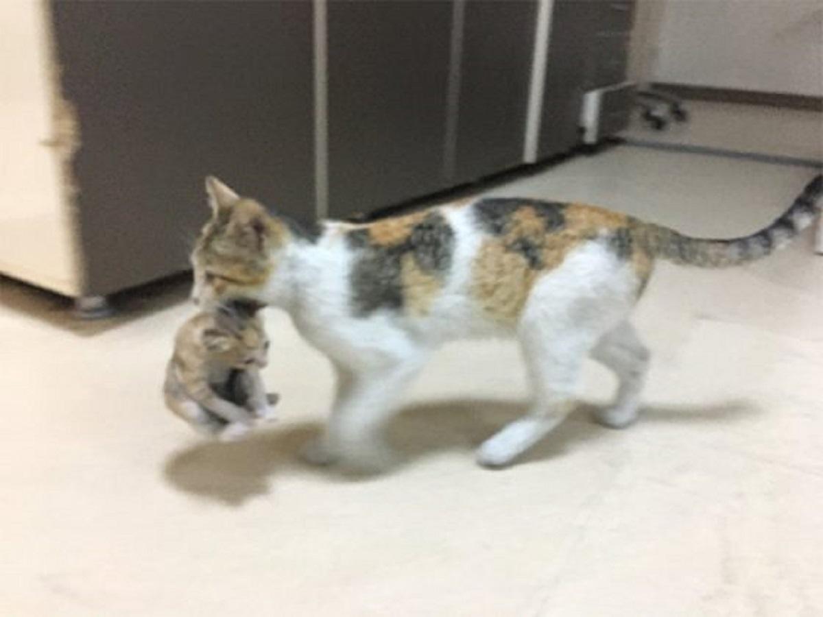 mother cat takes her sick kitten to hospital 5eaaaf4f11c8f  700 560x420 1 - Gata carrega seu filhotinho até o hospital e fica aguardando atendimento!