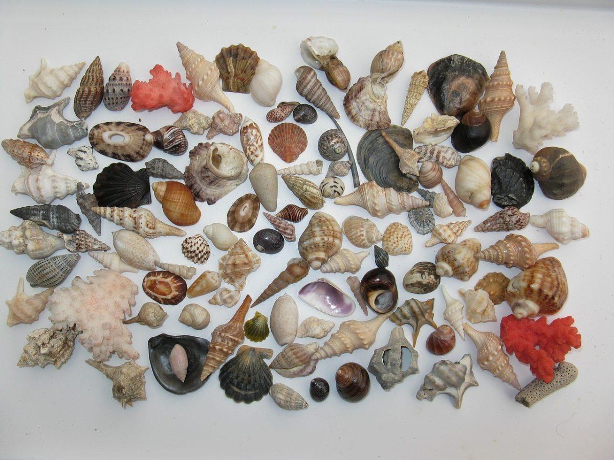 mussels 1327416 1280 scaled - 20 coisas que você deve evitar ter na sua casa, de acordo com Feng Shui!
