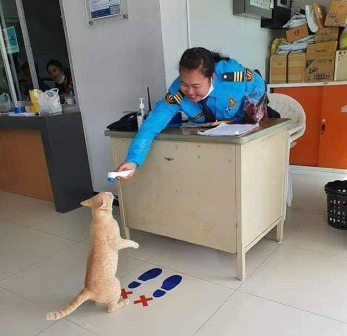 EkN2 ywU0AAkxib - 12 fotos de GATOS em situações hilárias para deixar seu dia mais alegre!