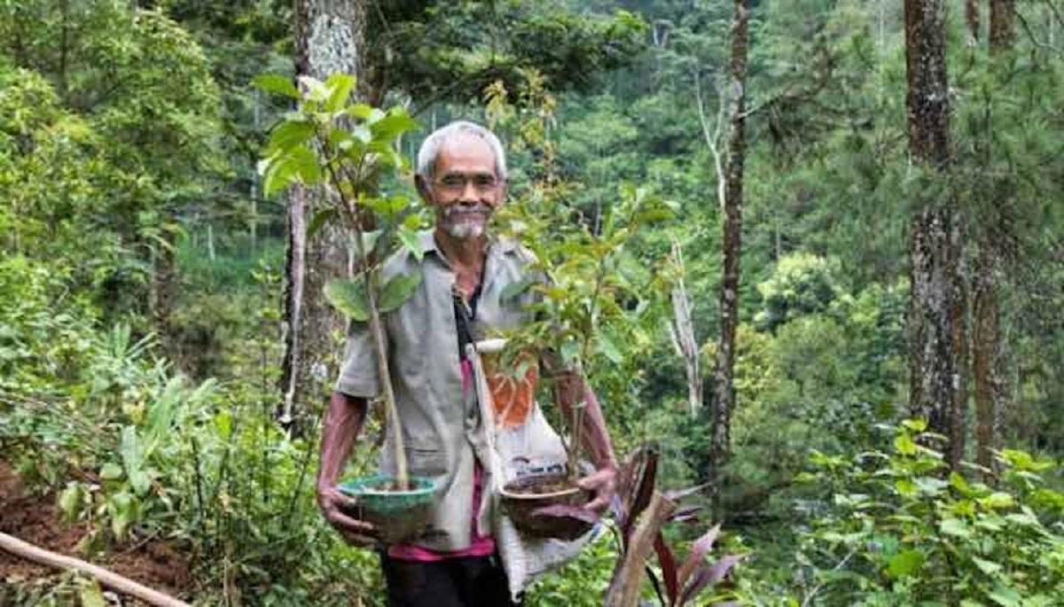 nonno ha piantato alberi - Homem de 68 anos plantou mais de 11 mil árvores a fim de combater o desmatamento!